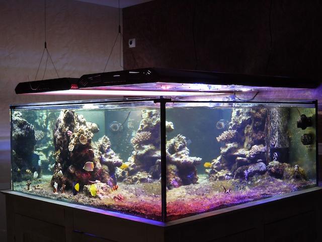 aquarium recifal eclairage led