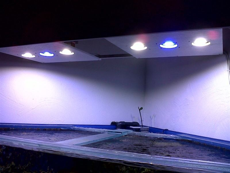 Recifal Recifal Reef Rampe A Leds